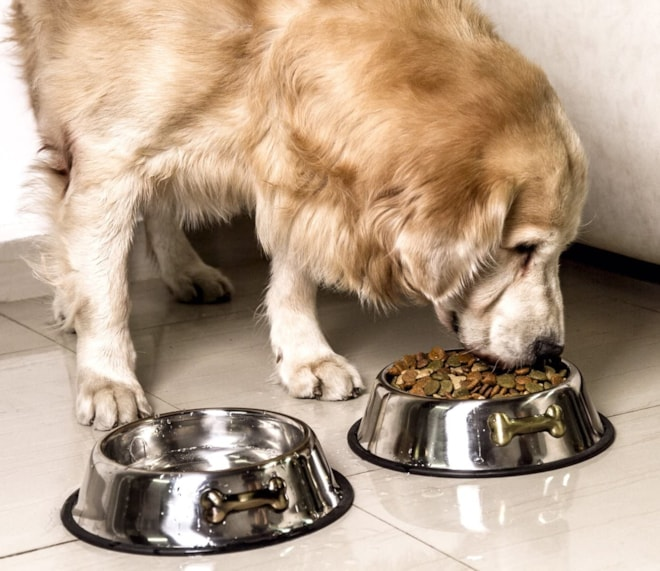 Gpet Dog Bowl 32 Ounce Stainless Steel With Rubber Base that Bowls Wont Slip, Perfect for Puppies an