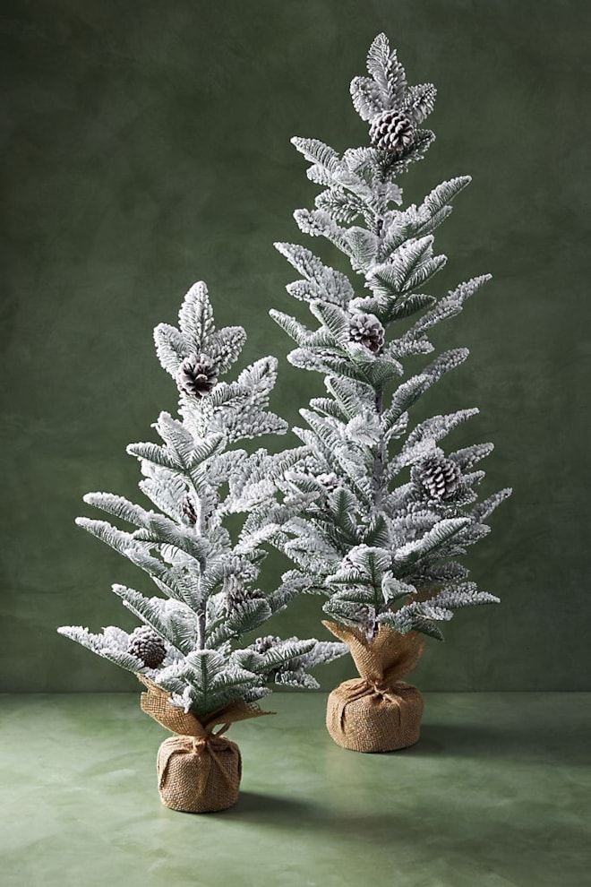 Snow-Dusted Pine Tree
